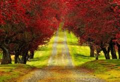 Весна, осень, проселочная дорога, красные деревья, обои