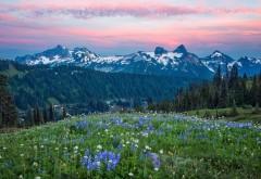 Гора в Вашингтоне Рейнир