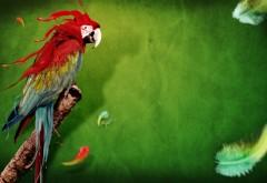 Попугай на природе скачать картинки