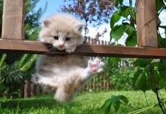 Маленький котёнок висит на заборе