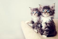 Милые котята обои маленьких малышей картинки