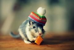 Смешная мышка кушает сыр картинки для рабочего стола с…