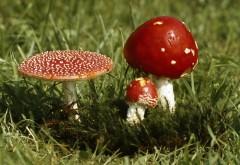 HD обои грибы мухоморы