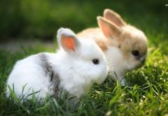 Милые пушистые кролики в траве фоновые заставки скачать