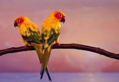 Красивые птицы фото hd бесплатно