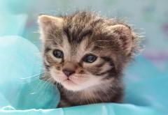 Кошка, взгляд, котята, животные, обои для рабочего стола