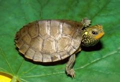 черепаха на зеленом листе