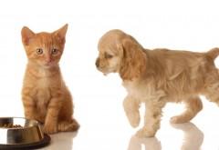Кошки, животные, собаки, картинки