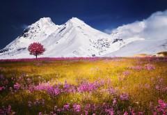 осенние поля, Альпы, горы, картинки
