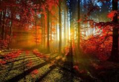 Широкоформатные обои осень красная листва