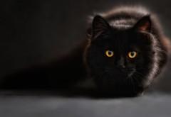 скачать картинку черного кота