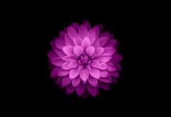 Цветок для iPhone картинки