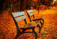 Осенью скамейке, скамейка, осень, фото, листва, золотая …