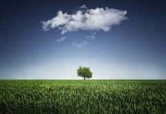 одно зеленое дерево широкоформатные обои hd