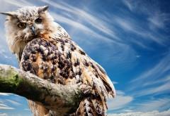 Сова на ветке, сова, птица, небо, ветка, взгляд, owl