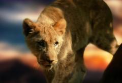 детеныш, lion, cub, львенок, лев, котик