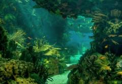 HD, море, морское дно, пейзаж, подводный океан, рыба, фото…