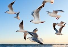 seagulls, чайки, птицы, клюв, небо, полет, стая