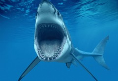 HD Акула, рыба, большие белые зубы, подводный мир, голубо…