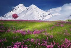 Горные заснеженные вершины на фоне красочного поля цв�…