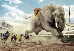 Соревнования собак со слоном смешные обои скачать