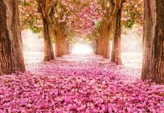 Яркие цветущие деревья весной скачать обои