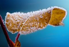 матовое лист, иней, ледяной листок, ветка, голубой фон, �…