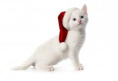 Белый котик в новогодней шапке