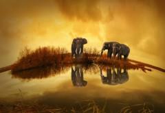 Слоны, слон, тайланд, озеро, шар земной, абстрактные
