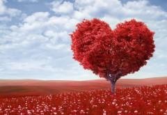 Красное сердце, любовь, романтика, дерево, поле, небо