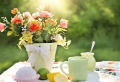 летние цветы горшок hd обои на рабочий стол