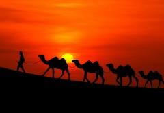 Арабский закат, ночь, верблюды, бедуин, пустыня