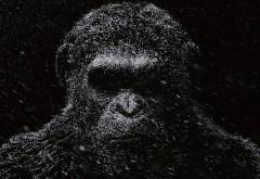 Война планеты обезьян фильм скачать обои на рабочий стол