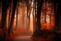 осенний лес широкоформатные фото hd