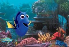 дори, мультфильм, немо, рыбка, жизнерадостная, радость, картинки