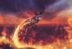 Огненный лис обои hd