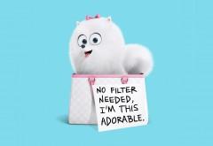 шпиц Гиджет белая собачка из мультфильма обои