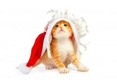 Милый рыженький котенок в новогоднем одеянии