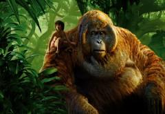 Маугли, король, Луи, книга джунглей, мультфильм, обои, HD
