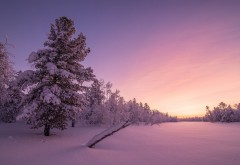 морозный рассвет, лес, зима, природа, деревья, снег, пей�…