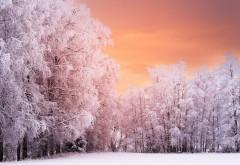 Зимний лес покрытый снегом красивые широкоформатные о…