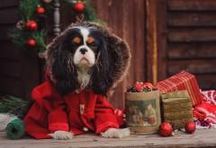 доска, пес, собака, пальто, коробки, подарки, праздник, н…