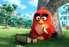 красный, red, angry birds, movie, Энгри Бердс, птичка, обои, HD, филь…