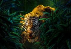 Шерхан, тигр, книга джунглей, мультфильм, мультфильм, обои, HD
