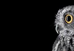 Ultra HD обои совы на черном фоне