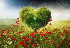 Дерево в форме сердца на фоне макового поля цветов обо�…