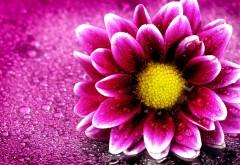 4K обои капли воды на розовом цветке макро