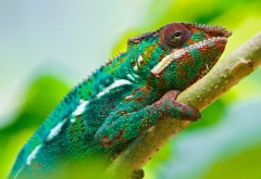 colorful_chameleon_4k-3840x2160-min