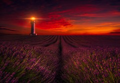 sunset_lavender_field_lighthouse_5k-2560x1600-min