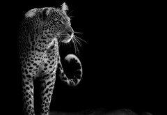 leopard_hd_4k-3840x2160